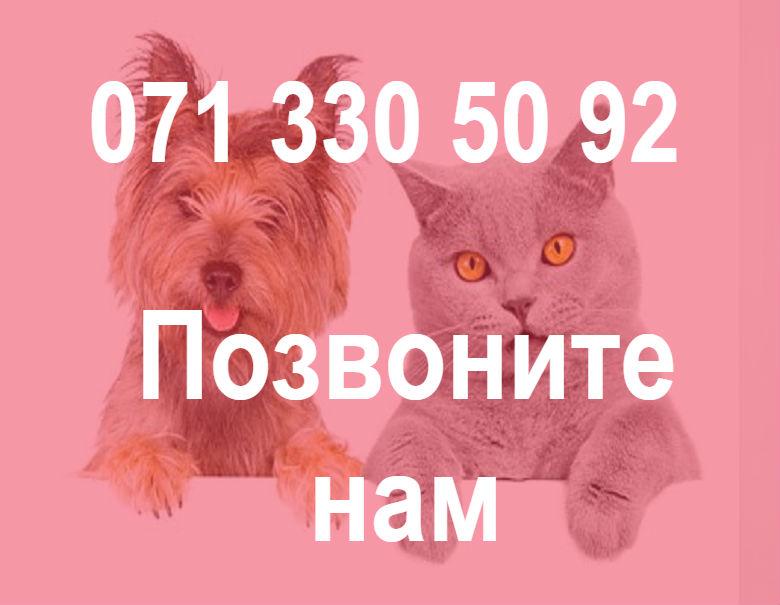 звонок_1